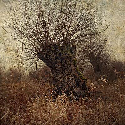 The Elders - p1633m2209073 by Bernd Webler