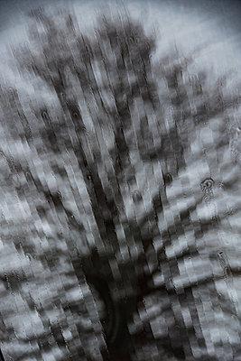 Baum hinrer einer verregneten Scheibe - p1649m2253065 von jankonitzki