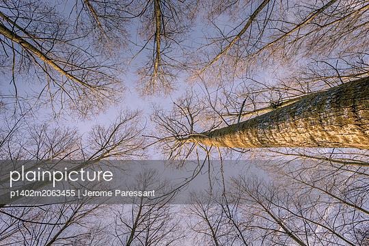 Hohe Bäume - p1402m2063455 von Jerome Paressant