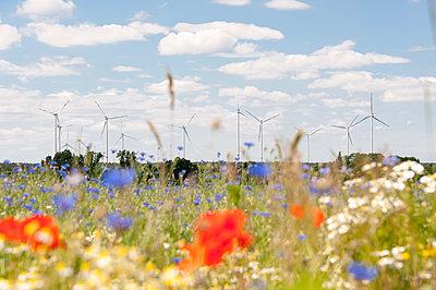 Windpark Calau - p1079m1072949 von Ulrich Mertens