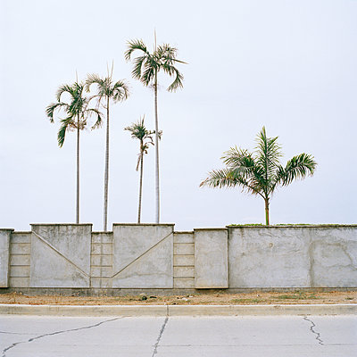 Palms behind wall, Ecuador - p1177m970398 by Philip Frowein