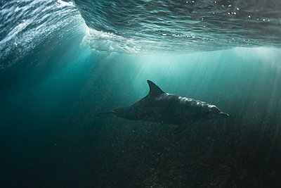 dolphin, water, underwater, reef, blue - p416m784798 by Andy Fox