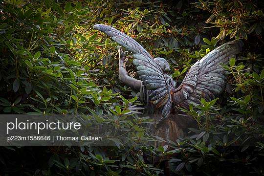Dem Licht entgegen - p223m1586646 von Thomas Callsen