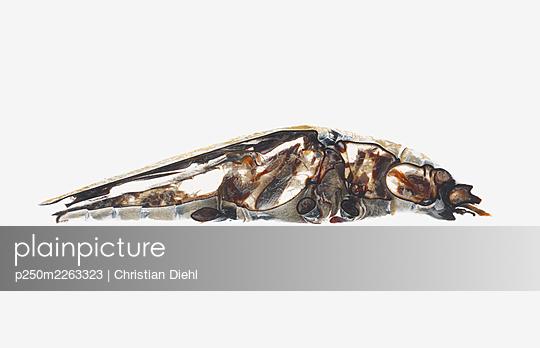 Bug - p250m2263323 by Christian Diehl