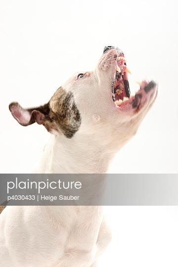Barking - p4030433 by Helge Sauber