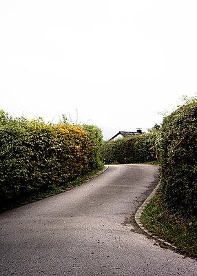 Straße mit Hecke - p1380m1441695 von van Dowski