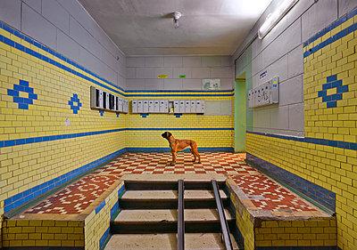 Hund im Treppenhaus - p390m1573867 by Frank Herfort