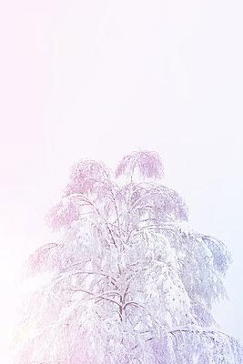 Snowy tree - p454m2071805 by Lubitz + Dorner