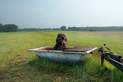 A dog sitting in a tub in a field - p30115032f by Julia Christe