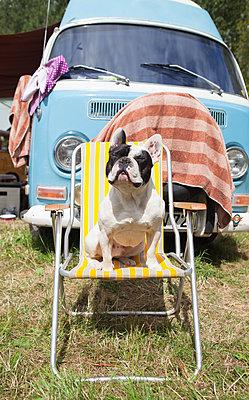 Hund nimmt Sonnenbad auf Klappstuhl - p045m2005012 von Jasmin Sander