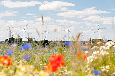Windpark mit Blumenwiese - p1079m1184979 von Ulrich Mertens