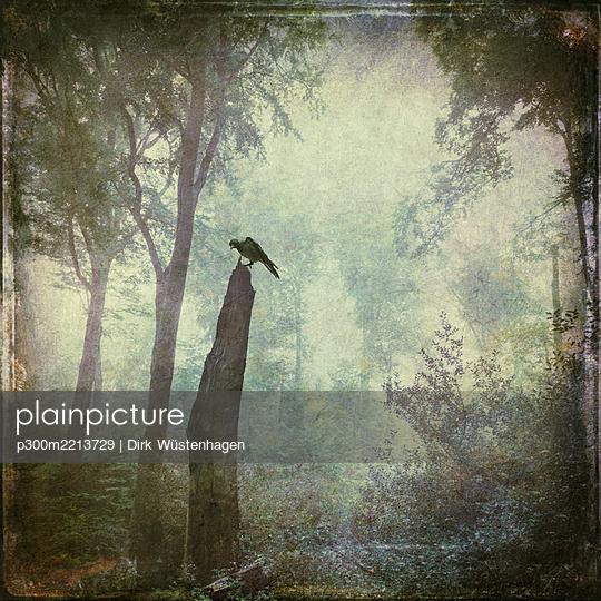 Bird sitting on dead wood in forest, alienation - p300m2213729 by Dirk Wüstenhagen