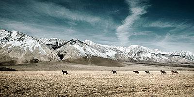 Wild Horses - p1155m955885 by Ebo Fraterman