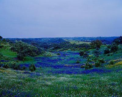 Blumenwiese in Landschaft - p362m1541458 von André Wagner