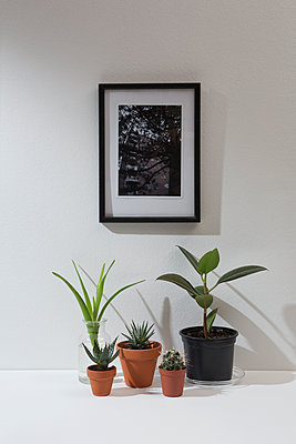 House plants and picture frame - p1149m1133302 by Yvonne Röder