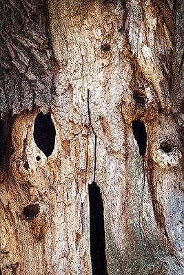 Tree - p1168m1007983 by Thomas Günther
