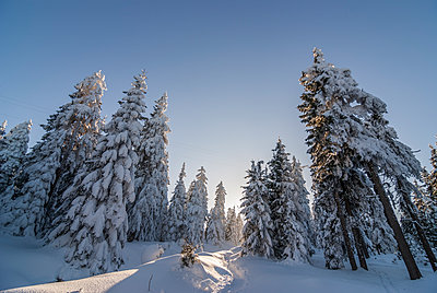 Germany, Saxony-Anhalt, Harz National Park, Landscape in winter - p300m1115170f by Patrice von Collani