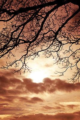 Sonnenuntergang umrahmt von kahlen Ästen - p597m2038634 von Tim Robinson