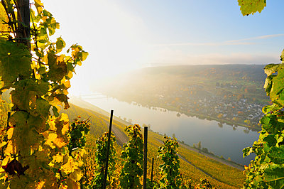 Moselle - p885m1087448 by Oliver Brenneisen