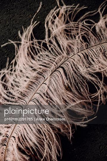Pink feather - p1621m2291785 by Anke Doerschlen