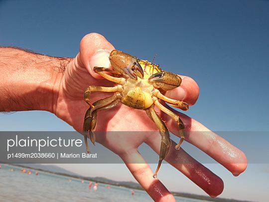 Krabbe in einer Hand - p1499m2038660 von Marion Barat
