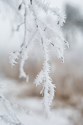 Germany, Brandenburg, Mahlow, Snow on plants at winter day - p300m2250915 by Anke Scheibe