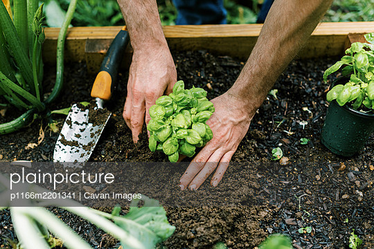 Photo of a man working in the vegetable garden - p1166m2201341 by Cavan Images