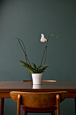 One White flower - p1082m1488466 by Daniel Allan
