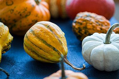 Ornamental pumpkins - p300m2042123 von JLPfeifer