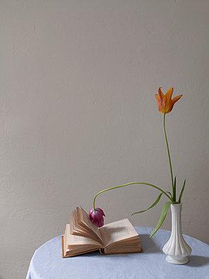Tulip reading - p444m1041392 by Müggenburg