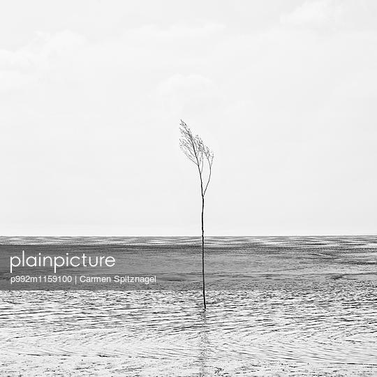 Wattenmeer - p992m1159100 von Carmen Spitznagel