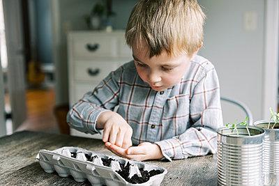 Five year old boy starting jalapeño seedlings. - p1166m2171525 by Cavan Images