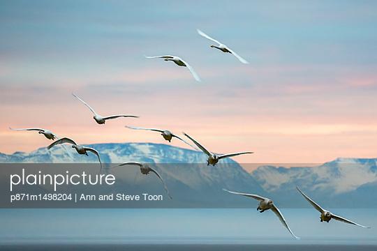 p871m1498204 von Ann and Steve Toon