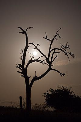 Full moon passing behind a dead tree - p1682m2260741 by Régine Heintz