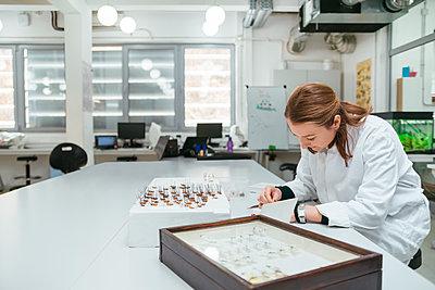 Laboratory technician working in biology lab - p300m1416492 by Zeljko Dangubic