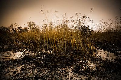 Gebüsch am Moorfleter Hauptdeich - p979m1546063 von Fred Dott
