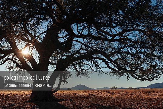 Baum in der Wüste - p1065m885964 von KNSY Bande