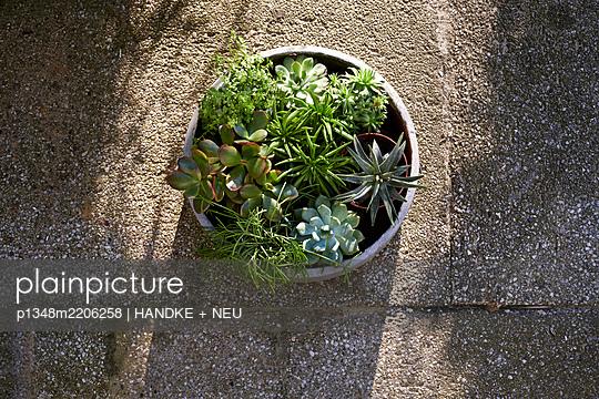 Pflanzenliebe - p1348m2206258 von HANDKE + NEU