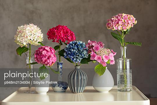 Sechs kleine Vasen mit Hortensienblüten vor grauer Betonwand auf weißem Tisch. - p948m2134934 von Sibylle Pietrek