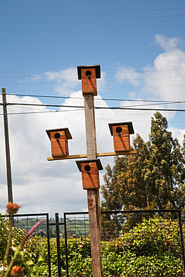 Bird houses - p1038m2087609 by BlueHouseProject