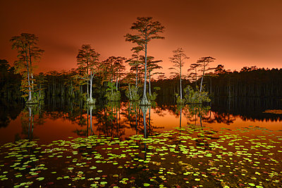 Scenic view of Cypress Lake with trees against sky during sunset - p1166m2025642 by Cavan Images