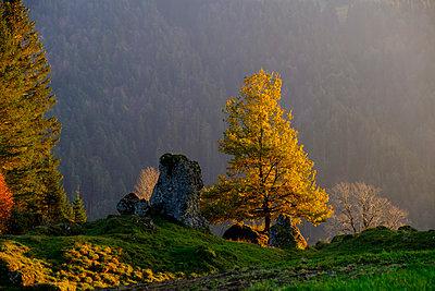 Austria, Vorarlberg, Nagelfluhkette Nature Park, Balderschwanger Tal, Sippersegg near Hittisau, stone and tree in autumn - p300m2070350 by Lisa und Wilfried Bahnmüller
