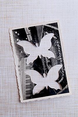 p451m2054888 by Anja Weber-Decker