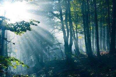 Wald - p829m741653 von Régis Domergue