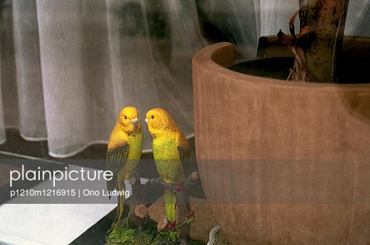 Zwei Wellensittiche - p1210m1216915 von Ono Ludwig