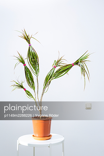 Houseplant - p1149m2288226 by Yvonne Röder