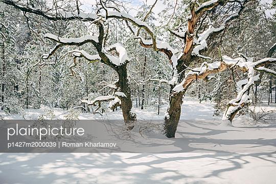 p1427m2000039 von Roman Kharlamov