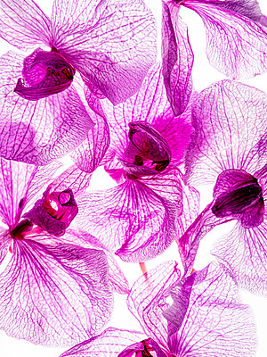 Orchid flowers - p401m2193035 by Frank Baquet
