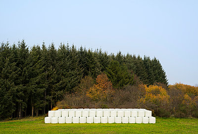 Hay bales wrapped in plastic - p1132m1503157 by Mischa Keijser
