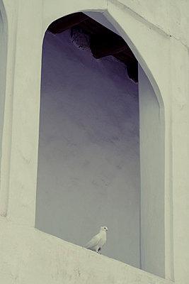 Eine Taube in einem Bogenfenster, Boukhara, Usbekistan - p1189m2176162 von Adnan Arnaout